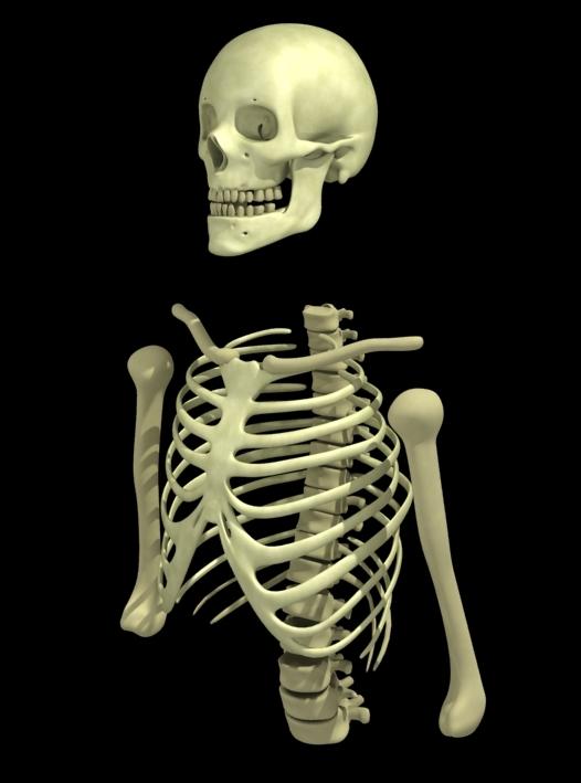 esqueleto_wip1
