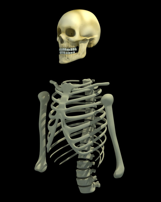 esqueleto_wip2